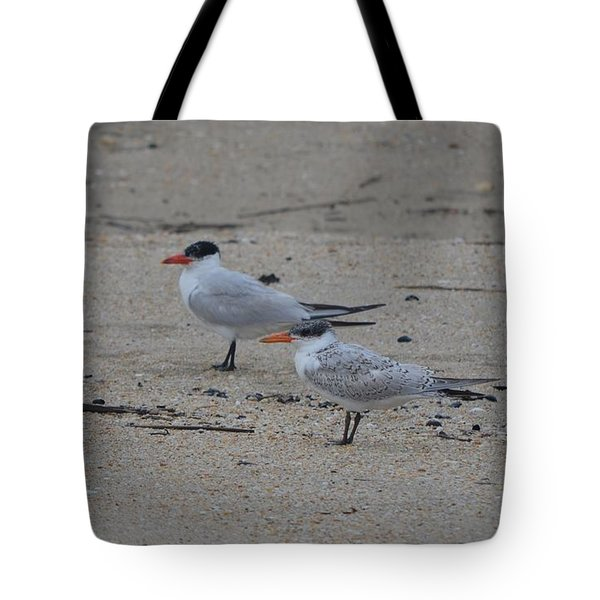 Tote Bag featuring the photograph Caspian Tern Young And Adult by James Petersen