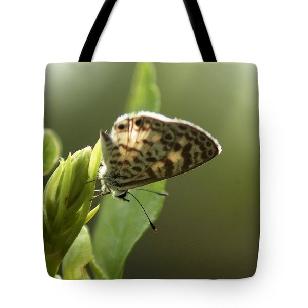 Cassius On Plumbago Tote Bag