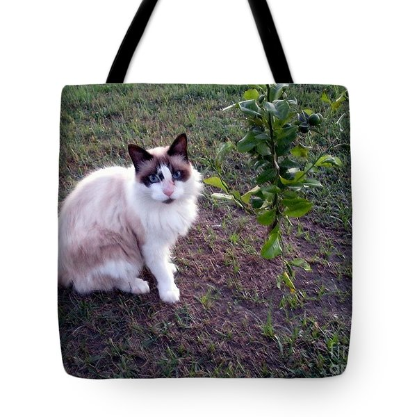 Tote Bag featuring the photograph Cat 'n Orange Tree by Joseph Baril