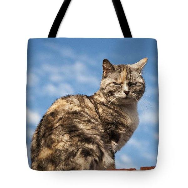 Cat On A Hot Brick Wall Tote Bag by Steve Purnell
