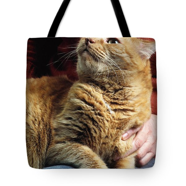 Cat On Lap Tote Bag by James L. Amos