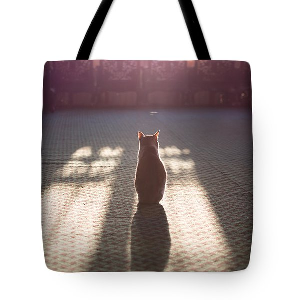 Cat Sitting Near Window Tote Bag by Matteo Colombo