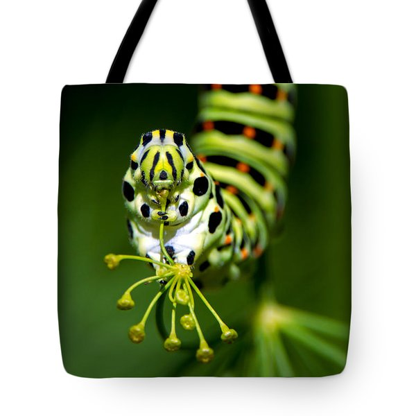 Caterpillar Of The Old World Swallowtail Tote Bag by Torbjorn Swenelius