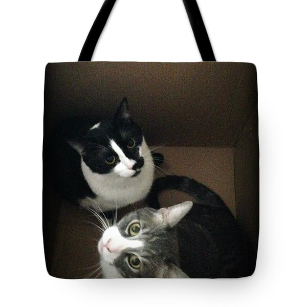 Tabby Cat Kitten Photography Pets  Tote Bag