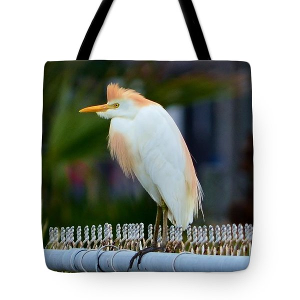 Tote Bag featuring the photograph Cattle Egret Breeding Plumage by Debra Martz