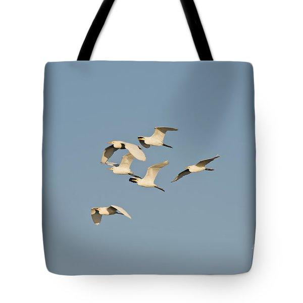 Cattle Egrets Tote Bag