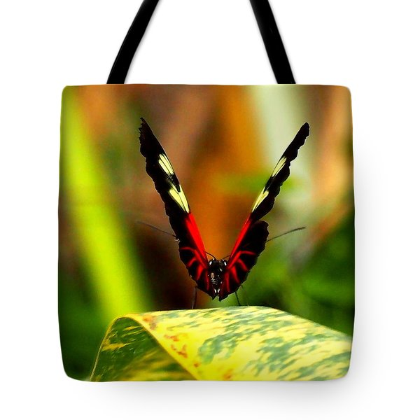 Tote Bag featuring the photograph Cattleheart Butterfly  by Amy McDaniel