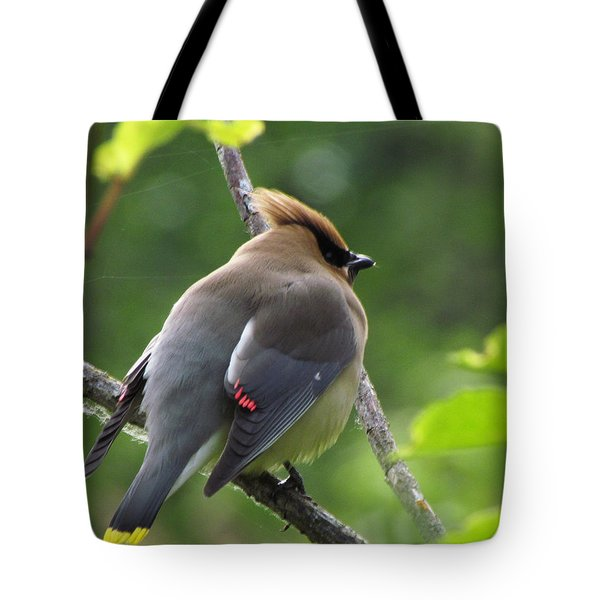 Tote Bag featuring the photograph Cedar Waxwin In Breeding Plumage by I'ina Van Lawick