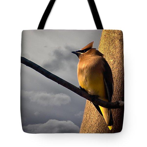 Cedar Waxwing Tote Bag by Bob Orsillo