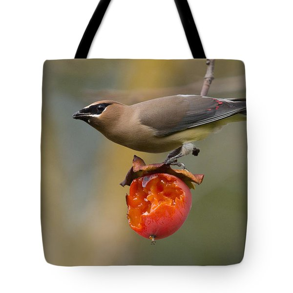 Cedar Waxwing Tote Bag by Doug Herr