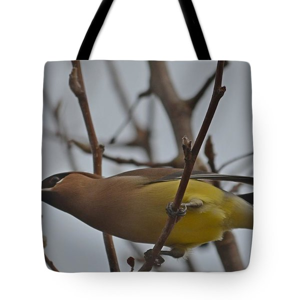 Cedar Waxwing Feasting In Foggy Cherry Tree Tote Bag by Jeff at JSJ Photography
