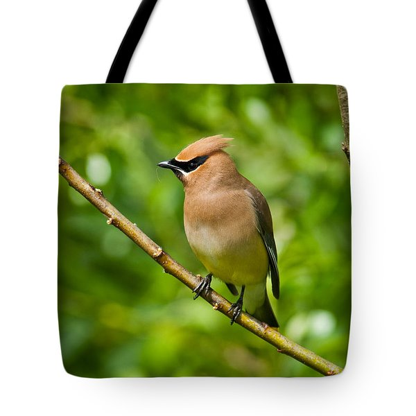 Cedar Waxwing Gathering Nesting Material Tote Bag by Jeff Goulden