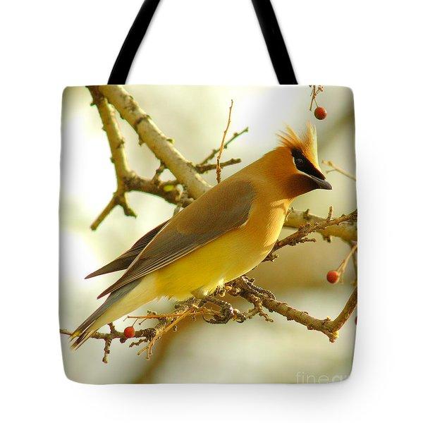 Cedar Waxwing Tote Bag by Robert Frederick