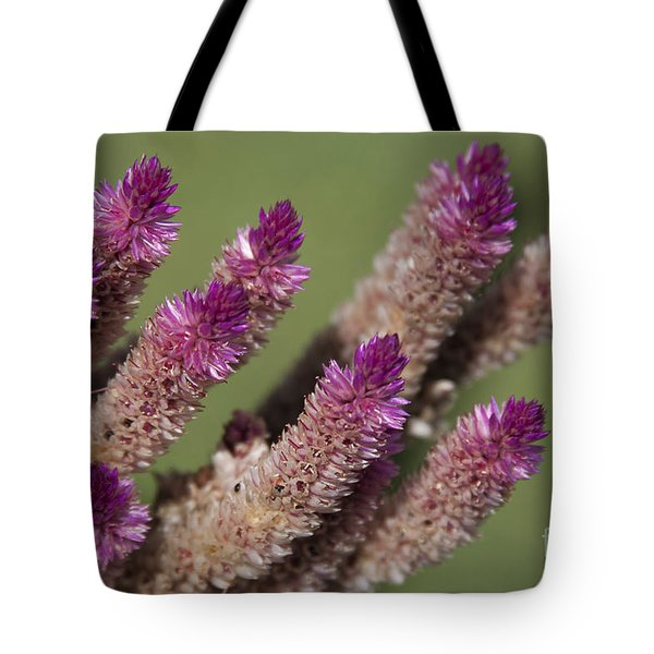 Celosia - Amaranthaceae Tote Bag by Sharon Mau