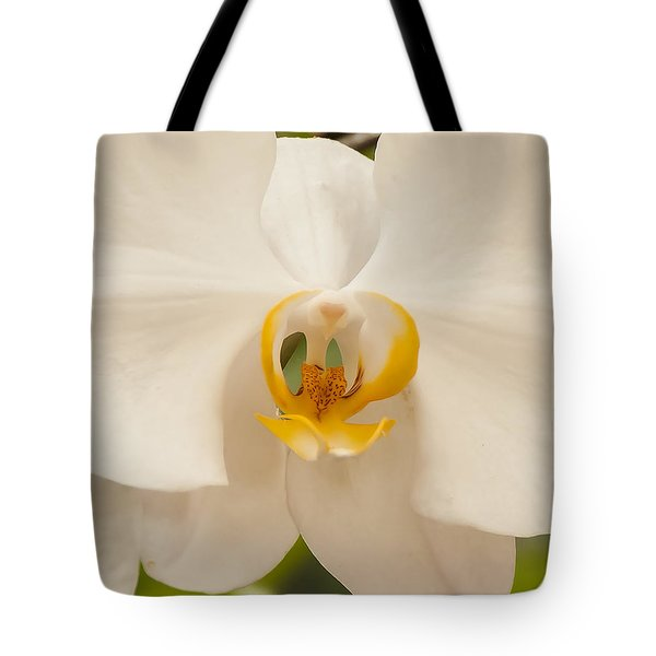Tote Bag featuring the photograph Center Of Attention by Dee Dee  Whittle