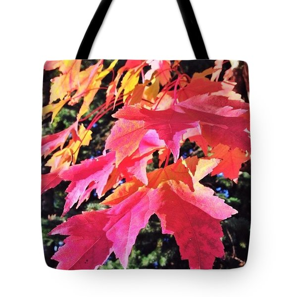 Changing Seasons Red Maple Leaves Tote Bag