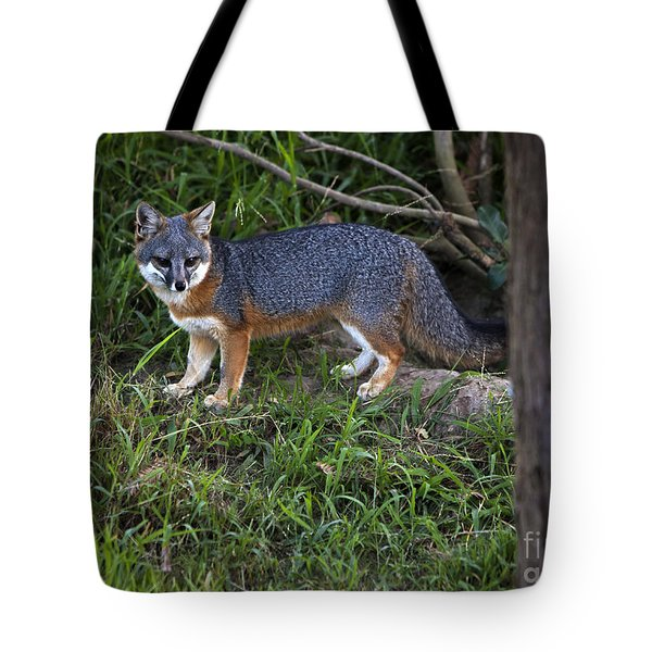 Channel Island Fox Tote Bag by David Millenheft