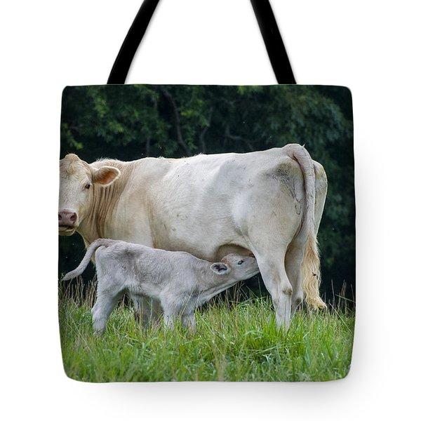 Charolais Cattle Nursing Young Tote Bag
