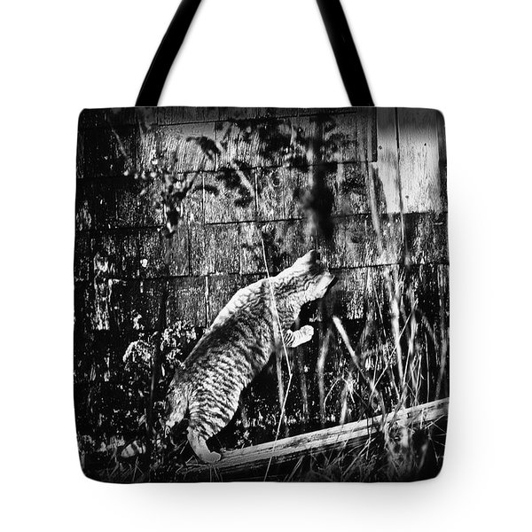 Chasing Shadows Tote Bag by Susan Capuano