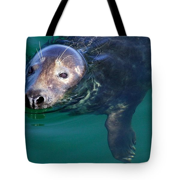Chatham Harbor Seal Tote Bag