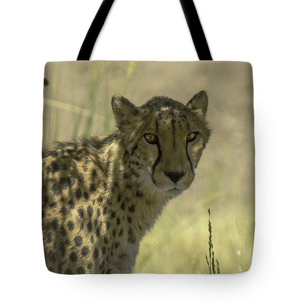 Cheetah Gaze Tote Bag by LeeAnn McLaneGoetz McLaneGoetzStudioLLCcom