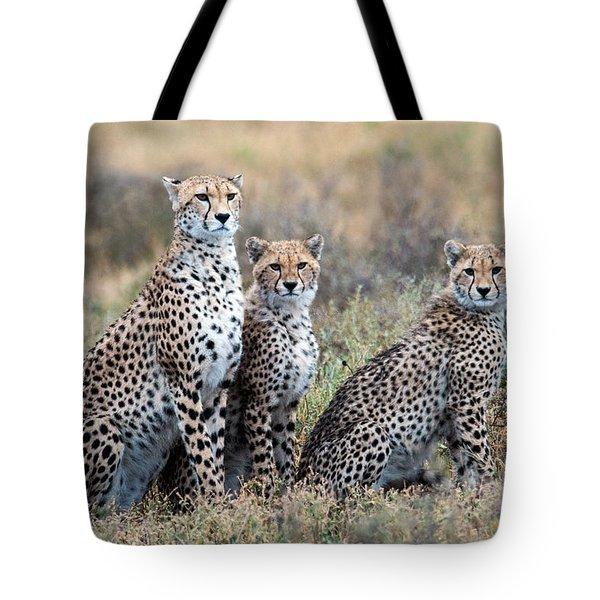 Cheetahs Acinonyx Jubatus In A Field Tote Bag
