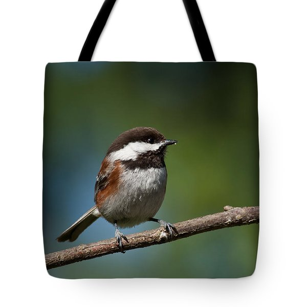 Chestnut Backed Chickadee Perched On A Branch Tote Bag