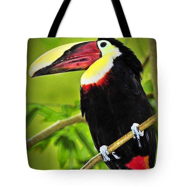 Chestnut Mandibled Toucan Tote Bag