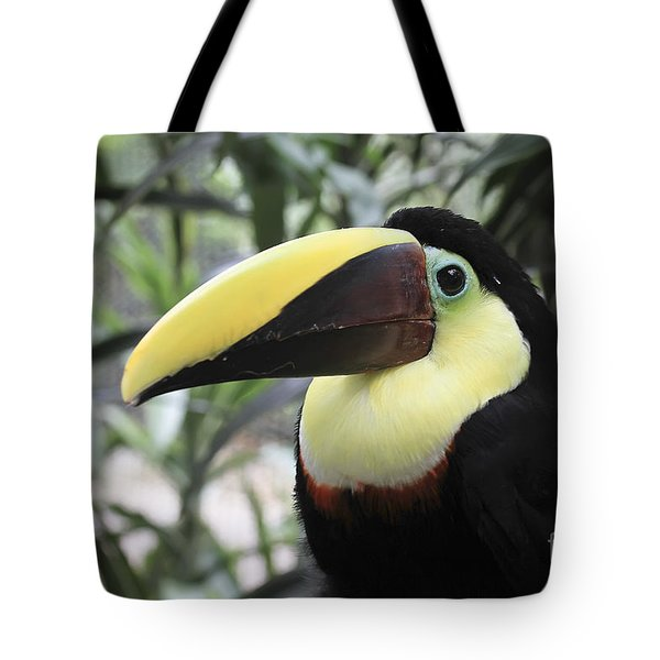 Chestnut-mandibled Toucan Tote Bag by Teresa Zieba