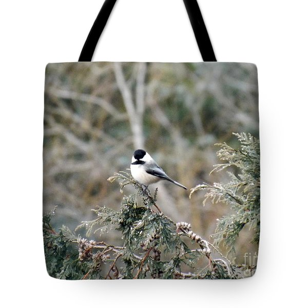 Tote Bag featuring the photograph Chickadee In Cedar by Brenda Brown