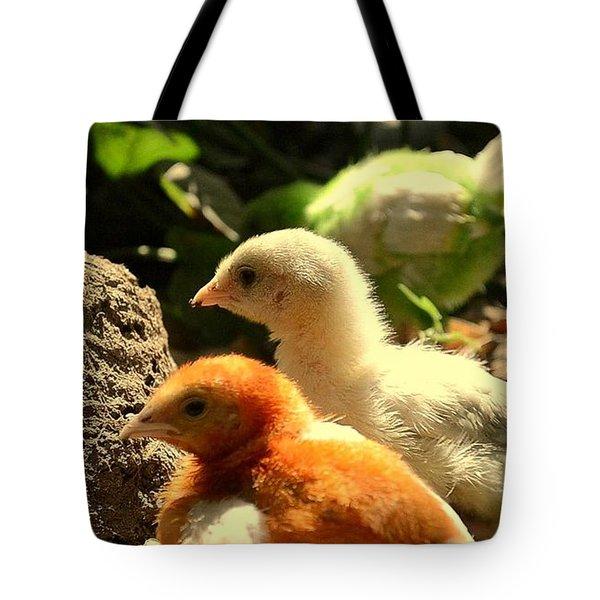 Tote Bag featuring the photograph Cute Chicks by Salman Ravish