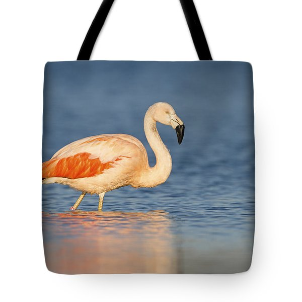 Chilean Flamingo Tote Bag by Ronald Kamphius