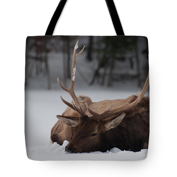Tote Bag featuring the photograph Chillin' by Bianca Nadeau
