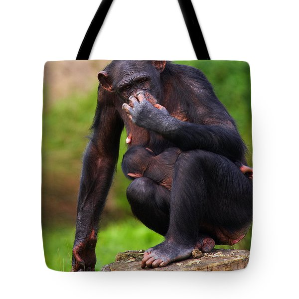 Chimp With A Baby On Her Belly  Tote Bag