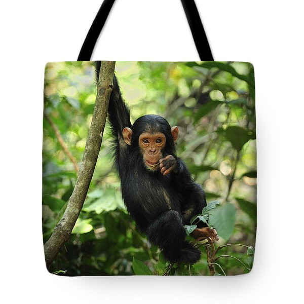 Chimpanzee Baby On Liana Gombe Stream Tote Bag