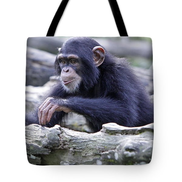 Chimpanzee Playing Tote Bag by Shoal Hollingsworth