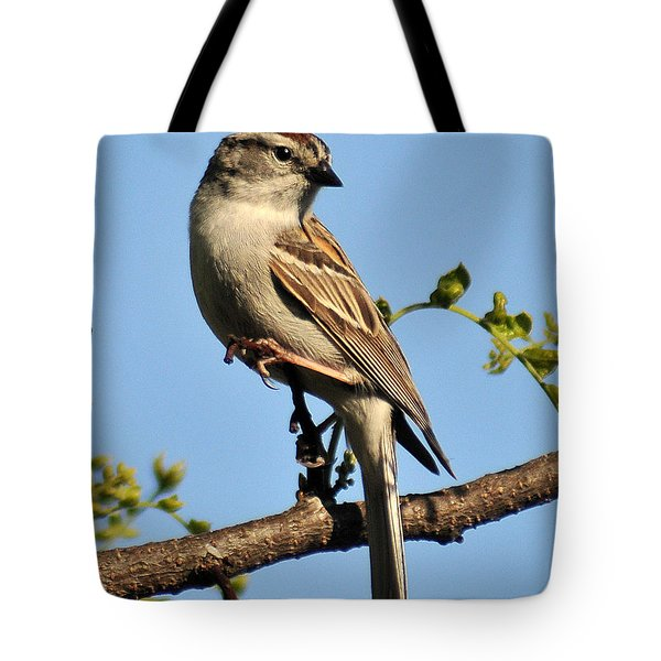Chipping Sparrow 246 Tote Bag