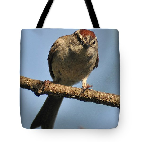 Chipping Sparrow 265 Tote Bag