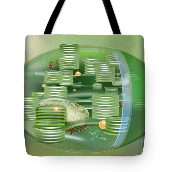 Chloroplast - Basis Of Life - Plant Cell Biology - Chloroplasts Anatomy - Chloroplasts Structure Tote Bag