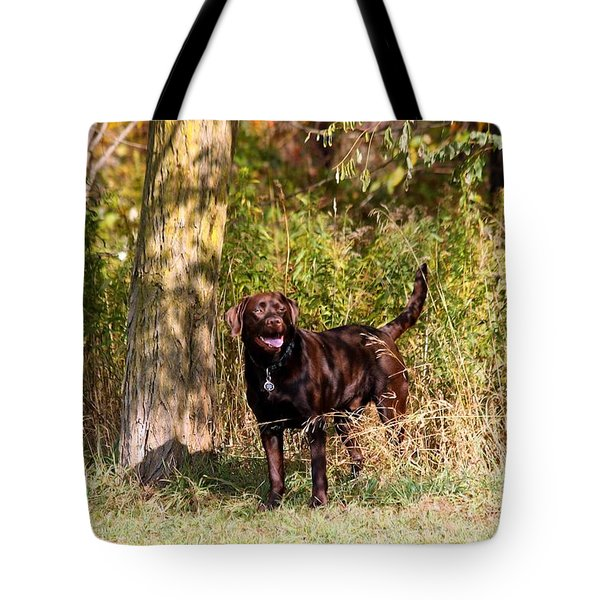Chocolate Lab Cuteness Tote Bag