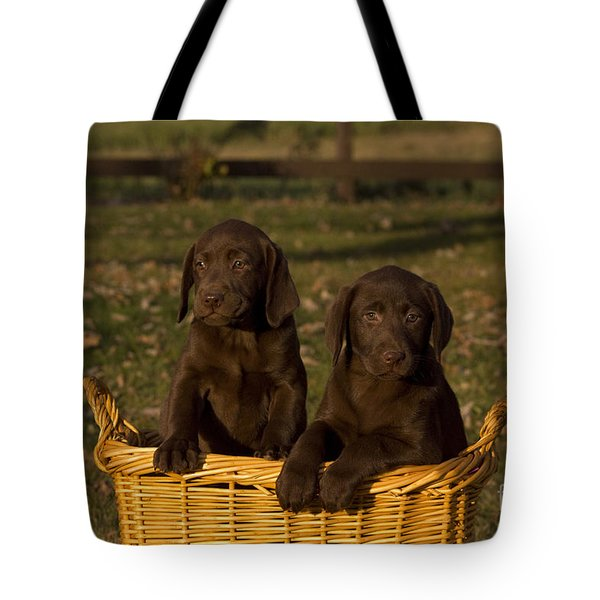 Chocolate Labrador Retriever Pups Tote Bag by Linda Freshwaters Arndt