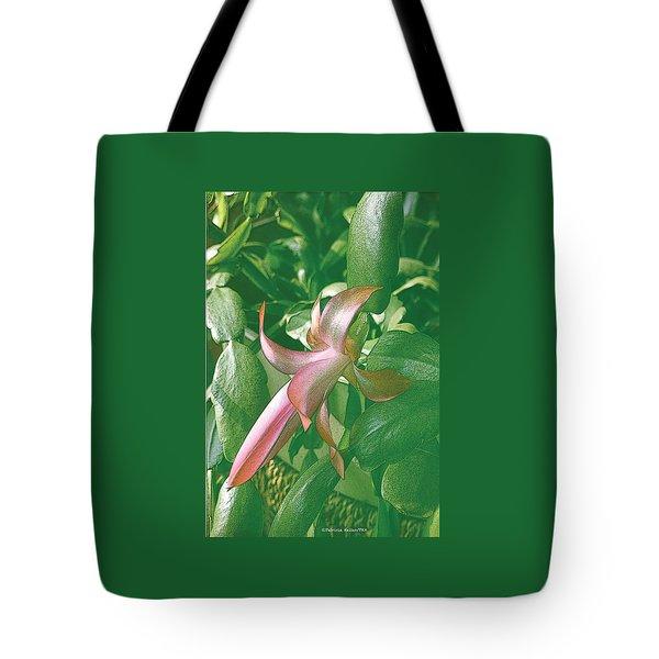 Christmas Cactus Blooms In May Tote Bag