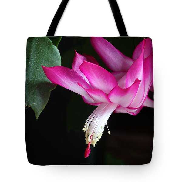 Christmas Cactus November 2014 1 Tote Bag by Mary Bedy