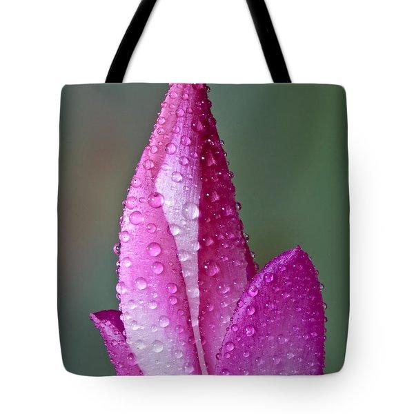Christmas Cactus  Tote Bag by Susan Candelario