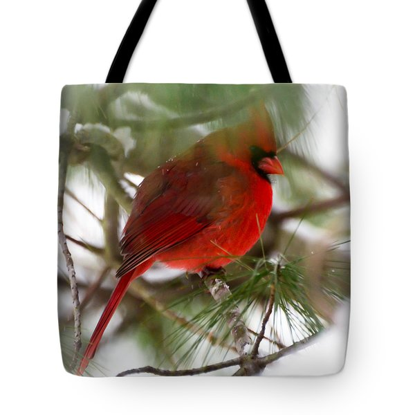 Tote Bag featuring the photograph Christmas Cardinal by Kerri Farley
