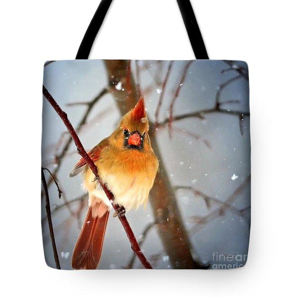 Northern Cardinal Snow Scene Tote Bag