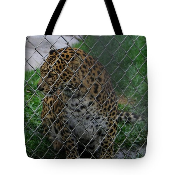 Christmas Leopard I Tote Bag