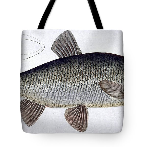 Chub Tote Bag by Andreas Ludwig Kruger