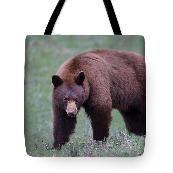 Cinnamon Black Bear Tote Bag