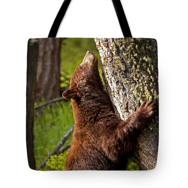 Tote Bag featuring the photograph Cinnamon Boar Black Bear by J L Woody Wooden